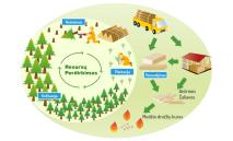 miškų supirkimas