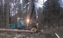 Stataus miško pardavimas medienai